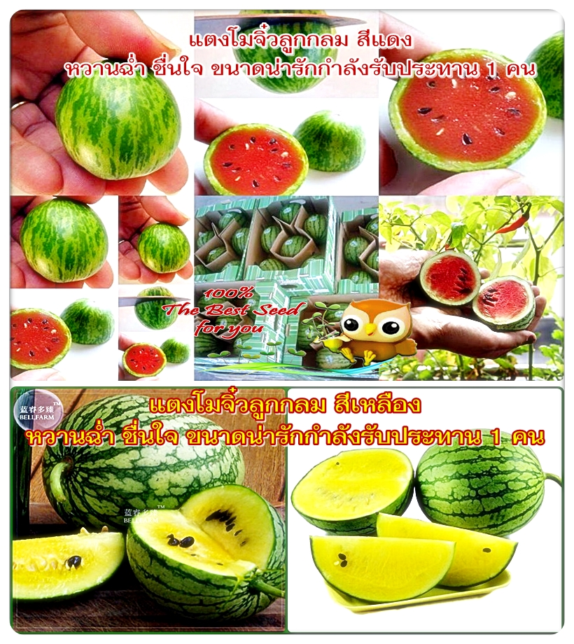 อาหารแตงโมบริสุทธิ์