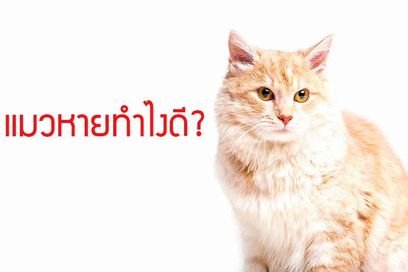 4 สาเหตุยอดฮิตที่แมวหาย แมวหายทำไงดี - TrackTrick : ปลอกคอ GPS แมว หมา  จีพีเอส เครื่องติตตามสัตว์เลี้ยงระยะไกล ป้องกันสัตว์เลี้ยงหาย : Inspired by  LnwShop.com